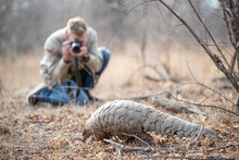 Pangolin And Guest