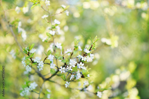 Spring blossom, springtime pink flowers bloom, pastel and soft floral card, selective focus, shallow DOF, toned © ulada