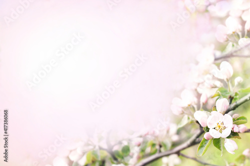 Spring apple blossom, springtime pink flowers bloom, pastel and soft floral card, selective focus, shallow DOF, toned © ulada