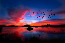 A Flock Of Birds Flying On The Background Evening Landscape Above The Lake