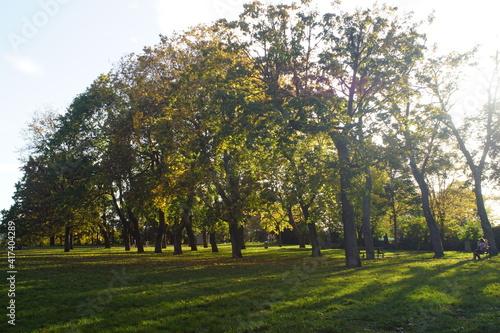 Fototapety, obrazy: Bäume im Park