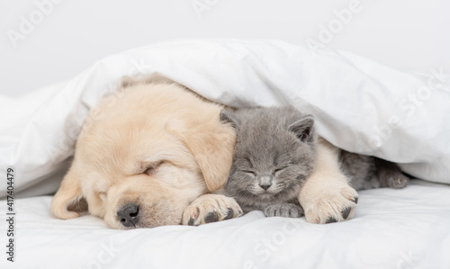 Golden retriever puppy hugs gray kitten. Pets sleep together under white warm blanket on a bed at home © Ermolaev Alexandr