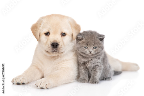 golden retriever puppy dog and kitten  lying together. isolated on white background © Ermolaev Alexandr