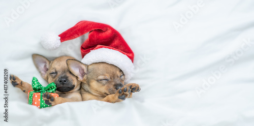 Cute Toy terrier puppies wearing red santa's hat sleep with gift box under a warm white blanket on a bed at home. Top down view. Empty space for text © Ermolaev Alexandr