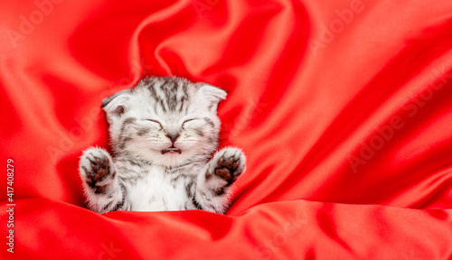 Funny kitten sleeps on red satin bedding. Valentines day concept. Top down view. Empty space for text © Ermolaev Alexandr