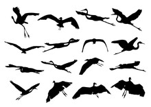 White Herons Set Of Silhouettes Of Birds Shadow