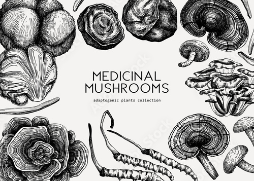 Fotografie, Obraz Medicinal mushroom illustrations background