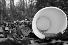 Empty Cardboard Cup As Trash On The Forest Floor