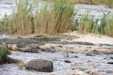 Kruger National Park: Nile Crocodiles Sunbathing On A Sandbank, Sabie River