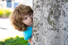 Kids Games. Playing Hide And Seek. Peekaboo. Little Boy Hiding By Tree.