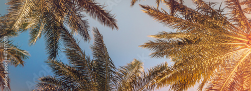 Tropical palm leaves on sunset for your summer holidays composition. Frame with a green foliage of palm tree on a beach of exotic islands, vintage toned. © Repina Valeriya