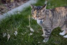 Calico Cat Portrait Outside On Lawn