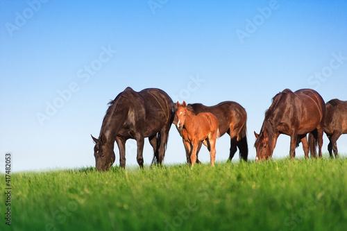Vászonkép Herd of horses on a background of blue sky