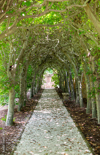 Pathway through a green archway Wallpaper Mural