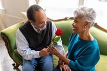 Senior Husband Gives Wife Rose Flower, Celebrating Their Love