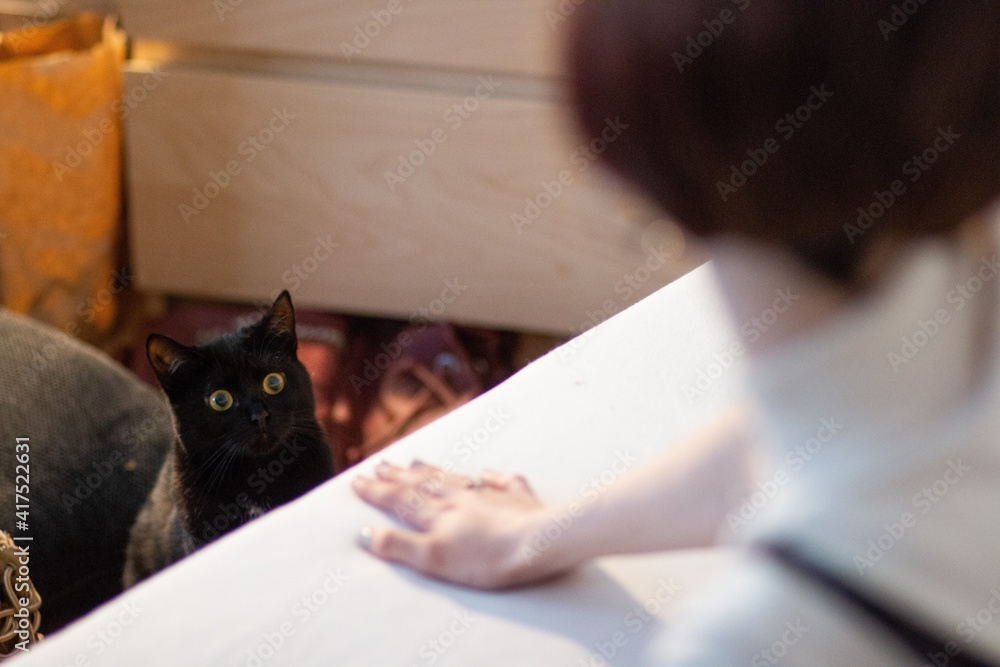 Fototapeta woman teasing black cat