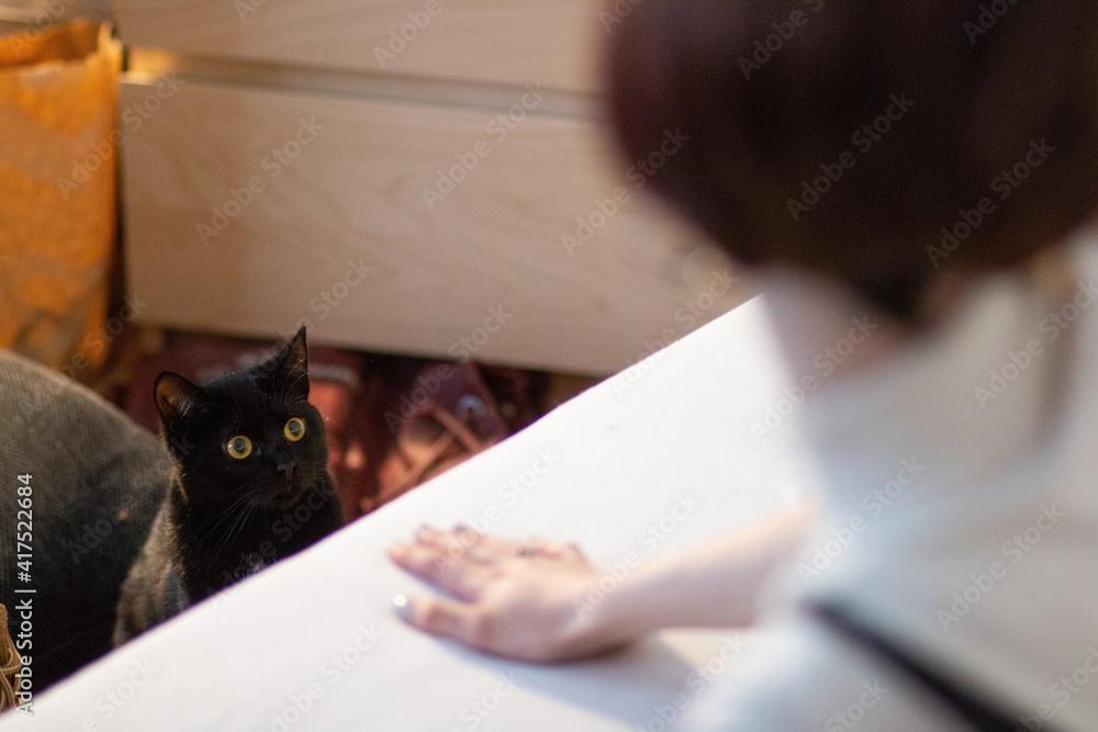 Fototapeta black cat looking at woman
