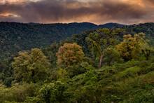 Beautiful Rainforest In Costa Rica South America.