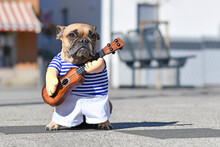 French Bulldog Dog Dressed Up With Street Perfomer Musician Costume Wearing Striped Shirt And Fake Arms Holding A Toy Guitar Standing In City Street On Sunny Day