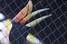 A Hornbill In A Cage With Sad Eyes