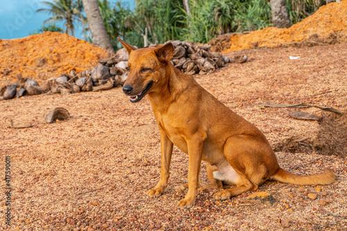 Brązowy dziki pies na tle palm i nieba. - fototapety na wymiar