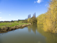 River Great Ouse In Milton Keynes, On A Summers Day, With Blue Skies And An Over Hanging Willow