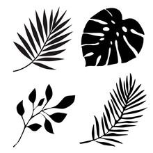Tropical Palm Leaf Illustration Background
