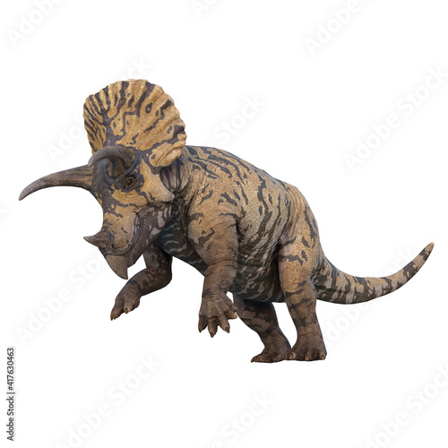 Fototapeta Triceratops dinosaur standing on hind legs