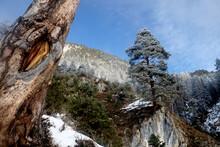 Winterlicher Bergwald