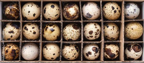 Obraz na plátně Quail eggs in the cardboard box. Top view, baneer for website.