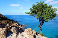 A Tree At The Rocky Coast Of Cyprus, Greece, Europe