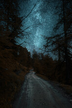 Road In The Forest At Night