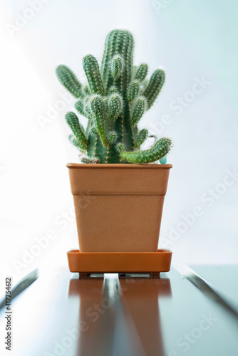 beautiful cactus and succulent plants in different pots © weerayut