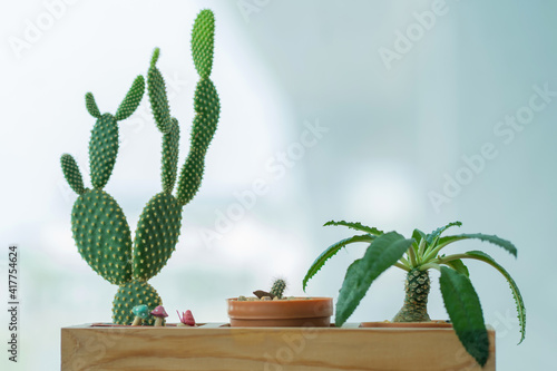 Collection of beautiful cactus and succulent plants in different pots © weerayut