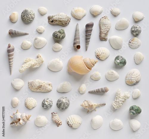 Billede på lærred Seashells collection on a white background