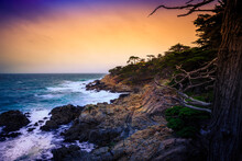 The Lone Cypress At Sunset, From The 17 Mile Drive, In Pebble Beach, California