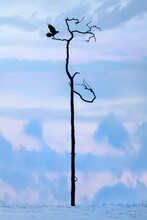 Lonely Dry Tree And Raven At Sunrise. Landscape In A Minimalist Style. Lake Baikal. Russia.