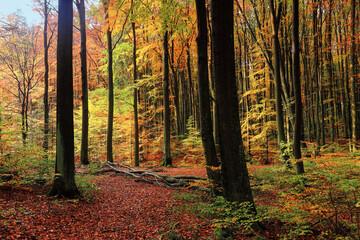 jesień w lesie na Warmii w północno-wschodniej Polsce