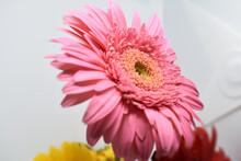 Selective Focus Shot Of A Pink Gerbera Flower