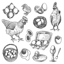 Chicken Farm Products Sketches Set. Hand Drawn Nest, Hen, Rooster, Basket With Eggs. Engraved Vector Illustration For Poultry, Meat, Food Production, Easter Concept