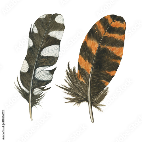 Fototapeta Two feathers wodpecker and woodcock isolated on white background