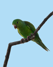 A Green Parakeet Perched On A Tree Branch