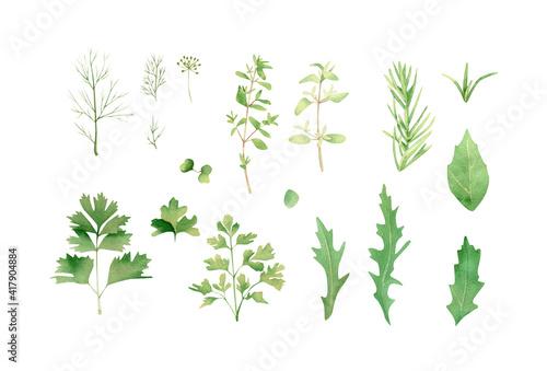 Photo Herbs set