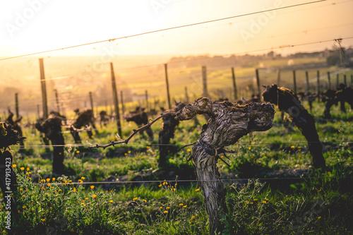 Photographie Les vignoble de Saint Emilion est prêt à se réveiller au mois de mars