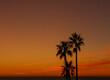 canvas print picture - Palmen vor rotem Himmel, bei Sonnenuntergang am Strand von Novo Sancti Petri Andalusien Spanien