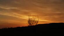 Bush Silhouette In A Intense Orange Sunset Sky