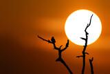 Fototapeta Zwierzęta - Ptak siedzący na gałęzi drzewa podczas zachodu słońca