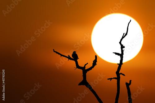 Fototapeta Ptak siedzący na gałęzi drzewa podczas zachodu słońca obraz