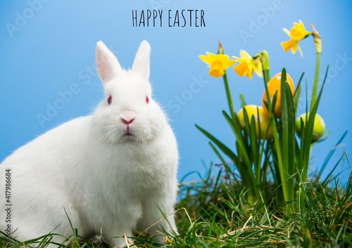 Happy easter text with daffodils and easter bunny on blue background