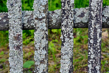 Mossy Plank Fence Close-up. Old Fence In The Village Near The House. A Fence Made Of Boards Around The Garden Area.